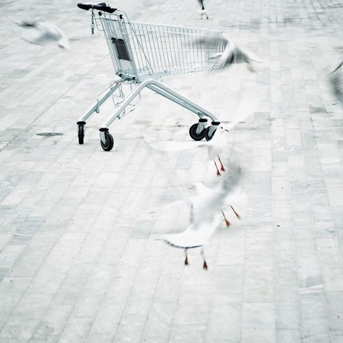 Shoping Cart Birds High Angle View Day City Street EyeEmNewHere EyeEmNewHere