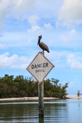Warning sign on a bird