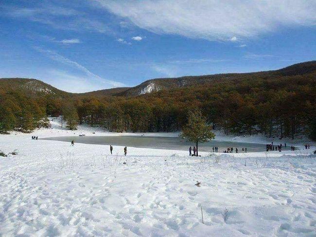 Tree Snowboarding Snow Cold Temperature Winter Mountain Ice Hockey Winter Sport Pinaceae Sky