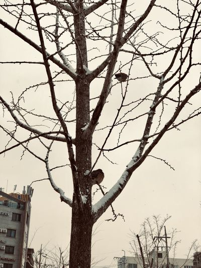 Tree Birds On