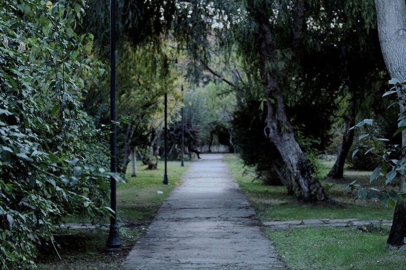 ... Green Trees