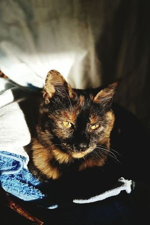 Shadow Sunlight No People Indoors  Close-up Mammal Day Cats Of EyeEm Cat Lovers Cat Sun Bathing