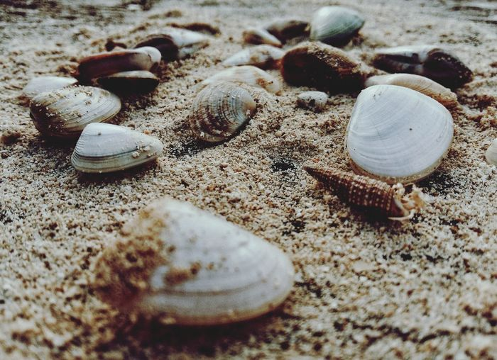 memories Clam Sand Sea Memories Clams Wallpaper Wallpapers Wallpaperstockphotos Beach Sand Seashell High Angle View Close-up Ocean Sandy Beach