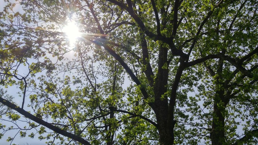 Tree Low Angle View Nature Growth Branch Green Color Day Beauty In Nature Leaf No People Outdoors Sunlight
