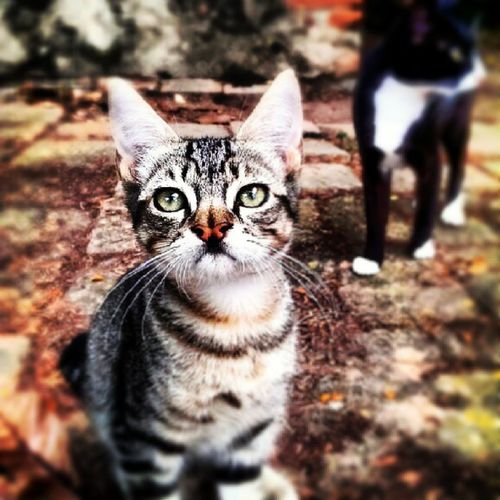 Gatet Gatito Kitty Gat Gato Cat Animal NasCuriós PicOfTheDay