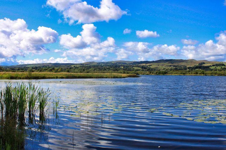 Water Tree Blue Lake Sky Landscape Cloud - Sky Calm Low Tide Water Plant