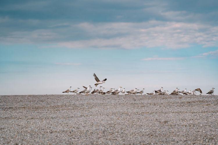 Seagulls flying over land