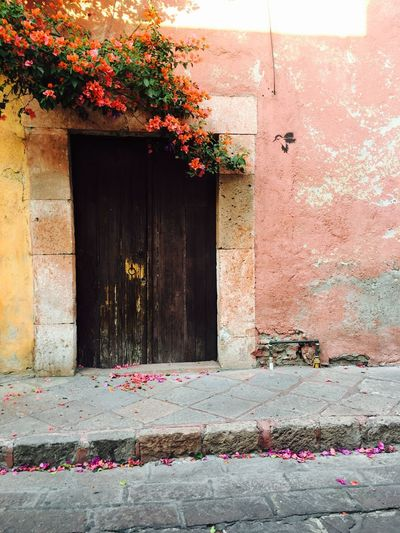 Architecture Door Built Structure House Building Exterior No People Outdoors Day Atravesdemisojos No Words!! Just A Photo Photography Moments Flores Secas Simple Photography Flowers Pink Flower Vintage Photo Queretaro,Mexico Queretaro Center Downtown Love ♥ Sweet