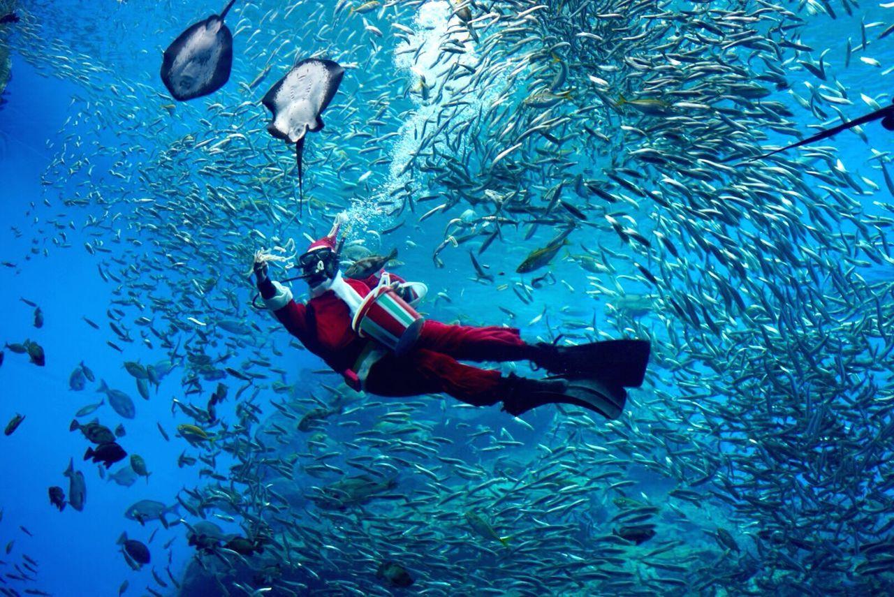 Man in santa claus costume swimming with school of fish underwater