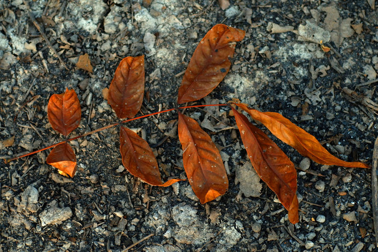 Close-up of dry autumn leaves on land
