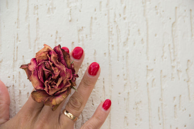 dried rose in hands Human Hand Hand Human Body Part One Person Body Part Flower Human Finger Holding Finger Real People Freshness Close-up Lifestyles Flowering Plant Plant Personal Perspective Wall - Building Feature Red Leisure Activity Nail Human Limb