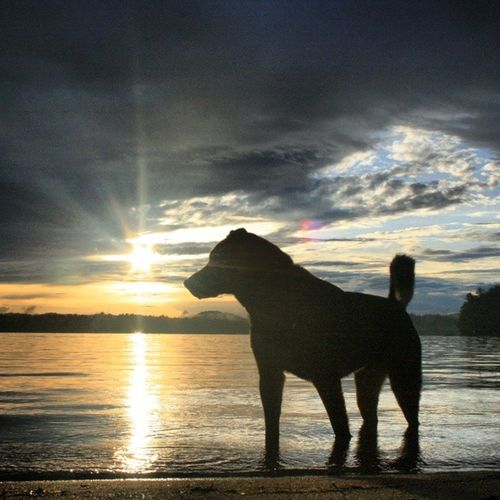 Rei1440project Lakedog Lakelife Bearisland summer paradise nh lifeisawesome
