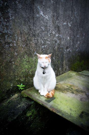 Check This Out EyeEm Gallery EyeEm Best Shots EyeEm Animal Lover Houtong Taiwan Cats Cat Cat Lovers Cat Village Buddha Cat Catsagram Cat Watching Cats Of EyeEm Colour Of Life Hidden Gems