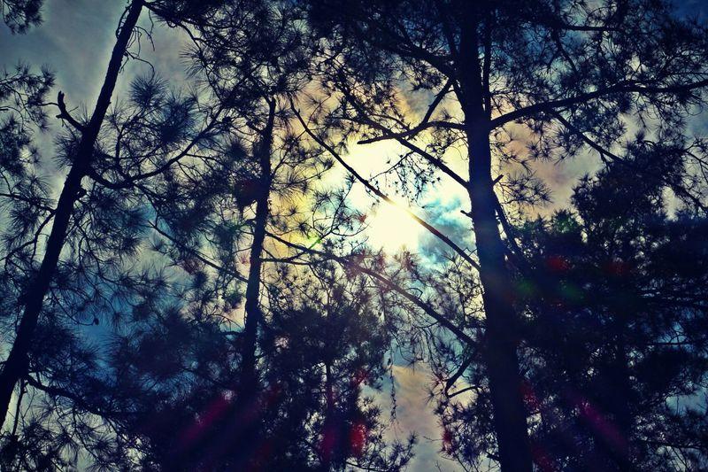 Moss Hill (no filter)