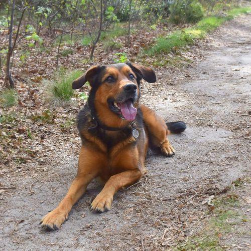 Dog One Animal Outdoors Netherlands Lemele Forest Lovelovelove Cute♡ Mydog♡ Happyday :) EyeEmNewHere