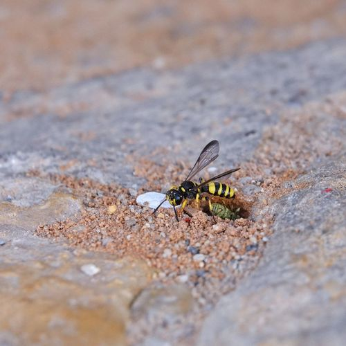 High angle view of wasp on field