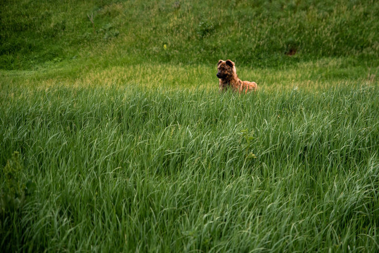 Dog looking away on grassy field