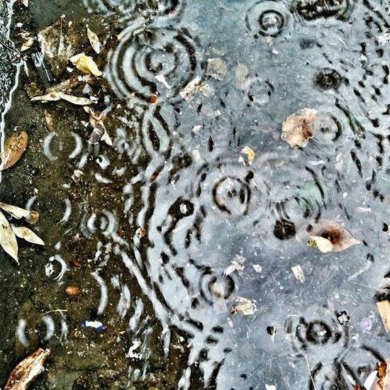 E alla fine pioggia fu! 🌧🌧🌧 Rain Raindrops Rainy Pioggia Picoftheday RainyDay Like4like L4l Instalike Likeforlike Instagood Photooftheday Lfl Ig_roma Roma Igersroma Rome Ig_rome Ig_italia Ig_italy Igersitalia Ig_lazio Gf_italy Igersrome Italy loves_roma igerslazio italia instaroma instaitalia