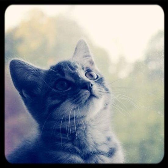 Mon marley <3 Cat I Love My Cat