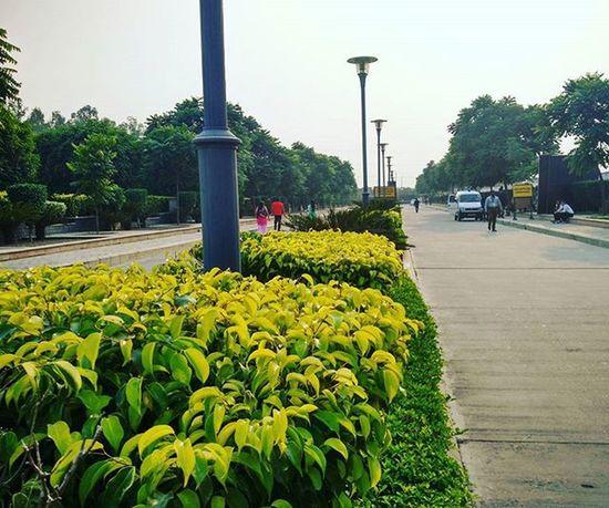 Green Nature Focus Mi4 Amity Irfan