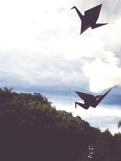 Fly Birdy Fly