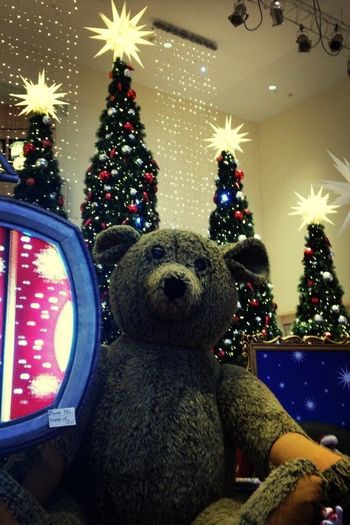 Teddy Bear❤ Feliz Navidad