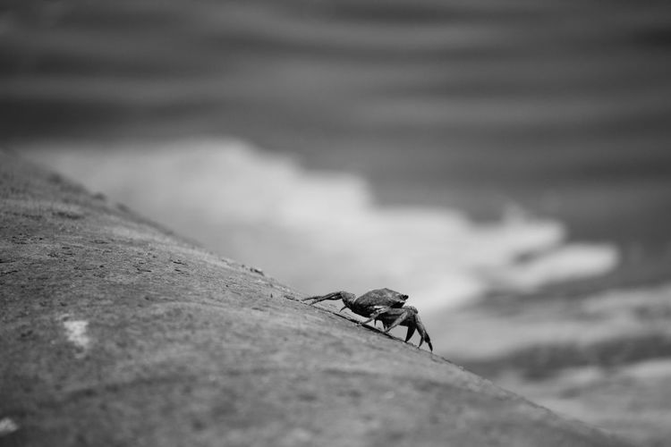 Animal Themes Animal Wildlife Animals In The Wild Beach Close-up Day Focus On Foreground Insect Nature No People One Animal Outdoors Selective Focus