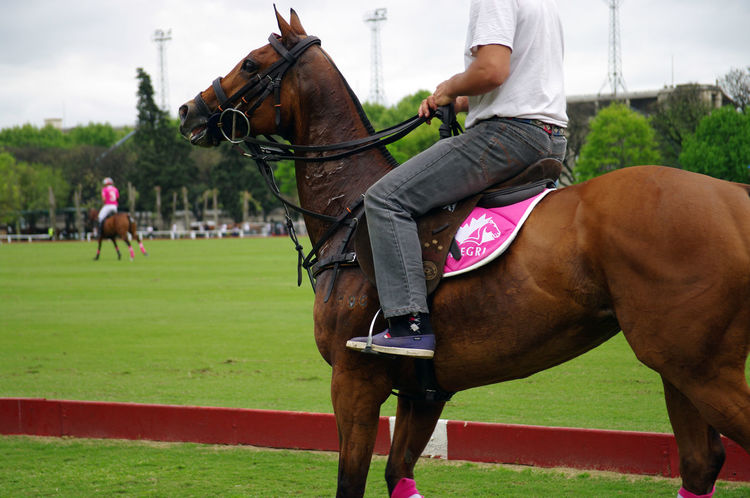 Due to the cultural influence of the UK, Argentina is a big fan of Polo game and...they won most of the time! Palermo Polo Rider Argentina Bridle Buenos Competition Competitive Sport Equestrian Games Field Grass Horse Horse Racing Horseback Riding Leisure Activity Livestock Men Outdoors Polo Game Polo Player Riding Sport Thoroughbred Working Animal