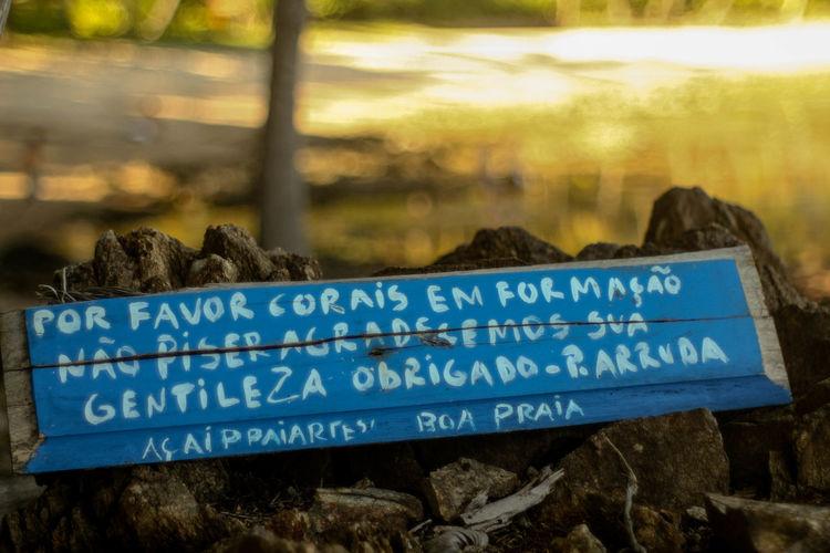 Bahia/brazil 50mm Tropical Climate Corals Ecofriendly