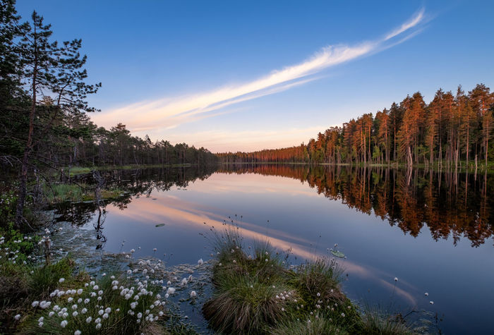 Scenic lake view with flowers and sunset at peaceful evening in Finland Calm Finland Peace And Quiet Sunlight Tranquility Wetland Beauty In Nature Blue Sky Cloud - Sky Dawn Flower Idyllic Lake Nature Non-urban Scene Plant Reflection Scenics - Nature Sky Standing Water Sunrise Sunset Tranquil Scene Tranquility Water