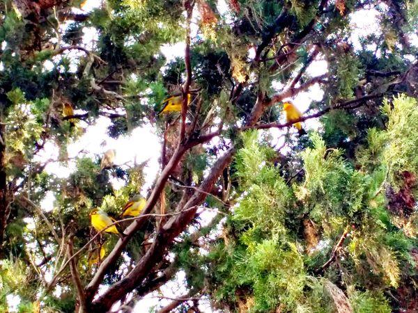 Awesome_shots Travel Photography EyeEm Animal Lover Bird Photography Birdwatching Motorola_snaps EyeEm Best Shots Birds🐦⛅ Birds Of EyeEm  Birds_n_branches Traveling From Where I Stand Himachal Pradesh, India