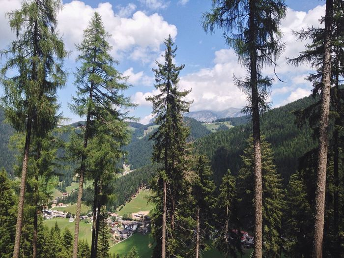 196/365 One Year Project 2017 July 15 South Tyrol Italy Tree Mountain Sky Nature Pine Tree Forest Cloud - Sky Tranquility Day Growth No People Scenics Tranquil Scene Green Color Beauty In Nature Landscape Outdoors Mountain Range