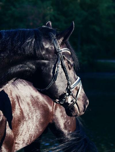Black horse standing against sky