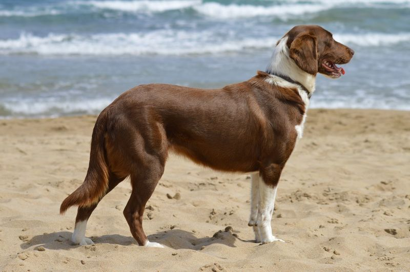 Dog standing on shore