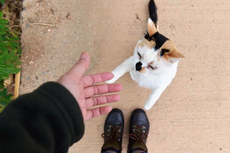 Domestic Animals Human Body Part From Where I Stand Four Legs And A Tail Cat Kitty Hello World Neko Gato Pets Human Hand
