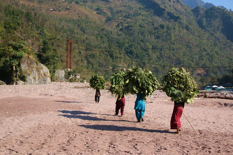 Rear view of women carrying plants on head while walking against mountain