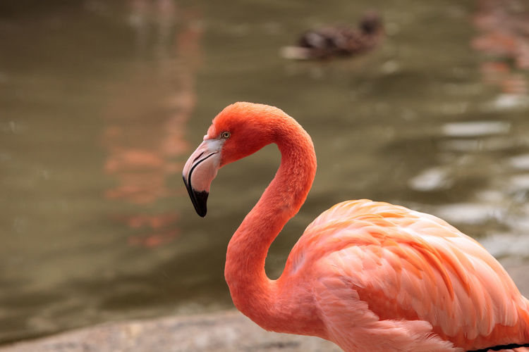 Side View Of Bird By Water