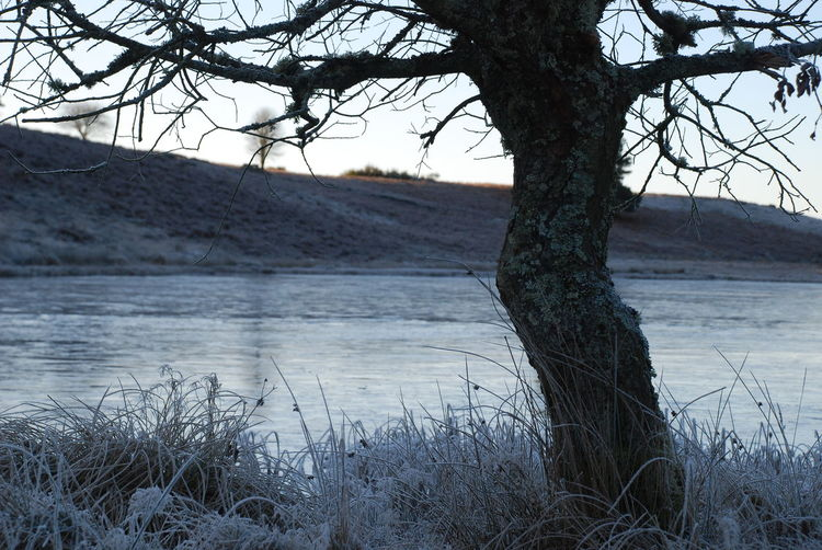 Dec 2017 Frozen Pond With Reeds Perthshire, Scotland Bare Tree Beauty In Nature Branch Day Frosted Grass Lake Landscape Nature No People Outdoors Scenics Sky Tranquil Scene Tranquility Tree Tree In Winter, Burr! Tree Trunk Water Winter