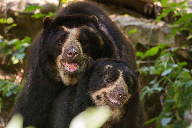 Close-up of bear with cub in forest