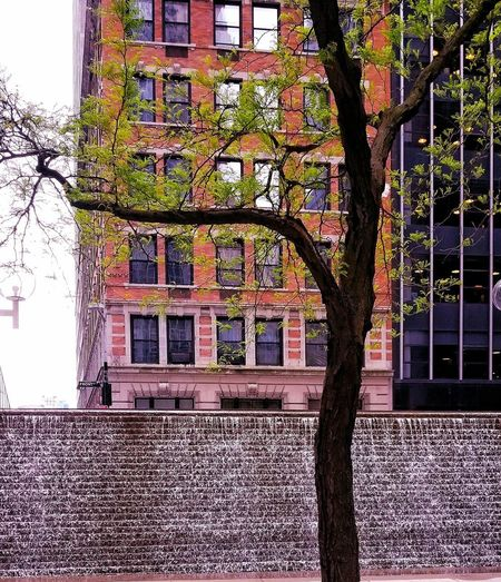 Tree Building Location EyeEmNewHere Water Downtown New York City Buildings City