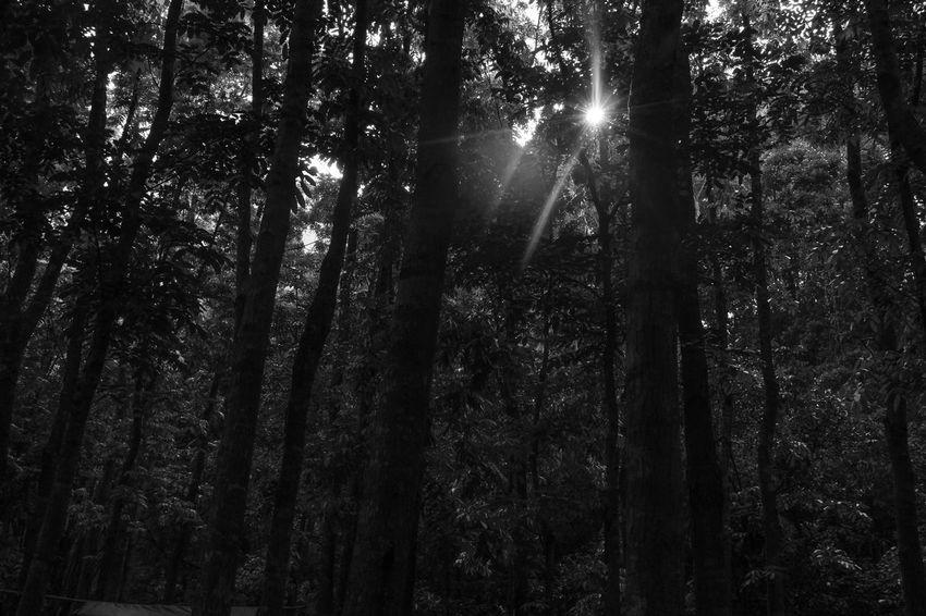 Scenics Day Tree Black & White Black & White Photography Komorebi Nature