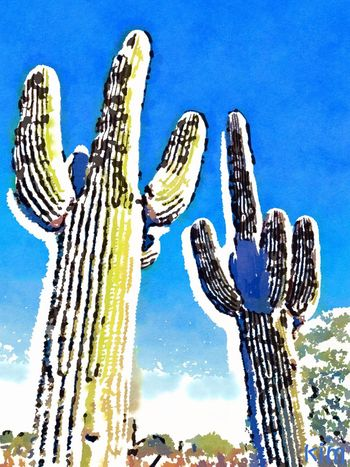 Beauty In Nature Blue Cactus Close-up Day Growth Low Angle View Nature No People Outdoors Plant Saguaro Cactus Sky