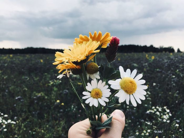 Cropped hand holding flowers over grassy field against cloudy sky