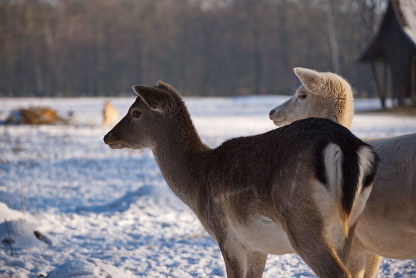Cold Temperature Winter Snow Nature Animals In The Wild Beauty In Nature Animal Wildlife No People Outdoors Animal Themes Mammal Day Scenics Landscape Togetherness Representing