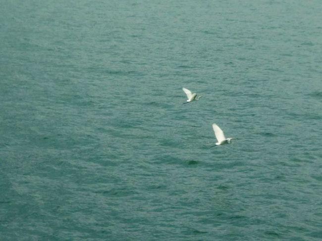 HongKong Birds Flying Birds A Pair Of Birds Shatin Maonshan Seaside Animals In The Wild