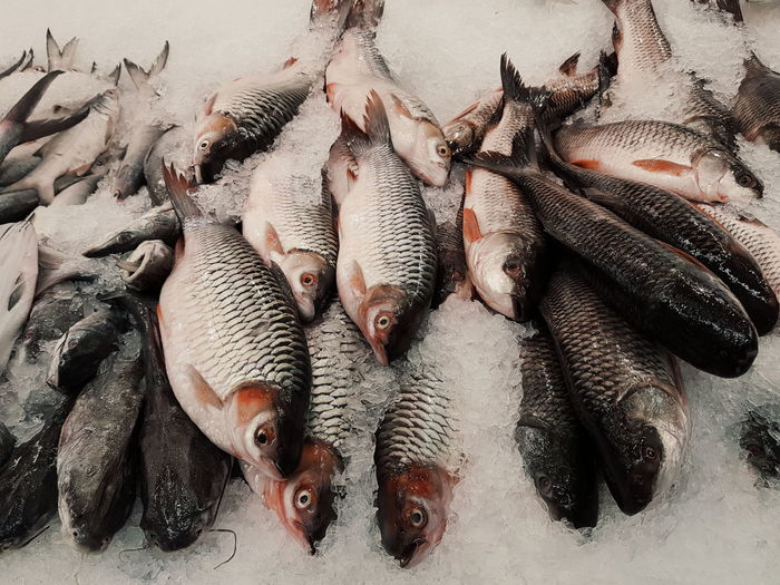 High angle view of fishes in fish