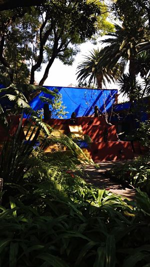 Tree Growth Nature No People Outdoors Beauty In Nature Low Angle View Day Leaf Tranquility Scenics Sky Frida Kahlo Museum
