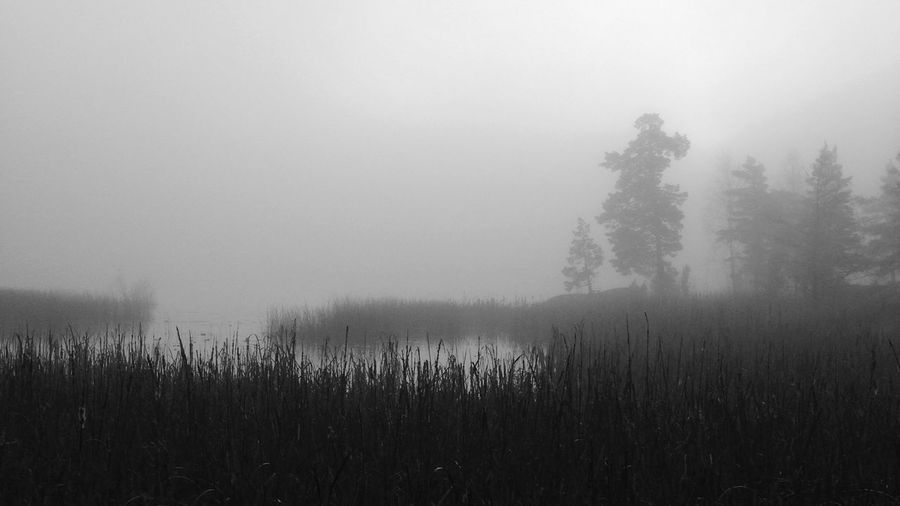 Foggy days Foggy Morning Calmwater Fog Over Water Landscape_Collection