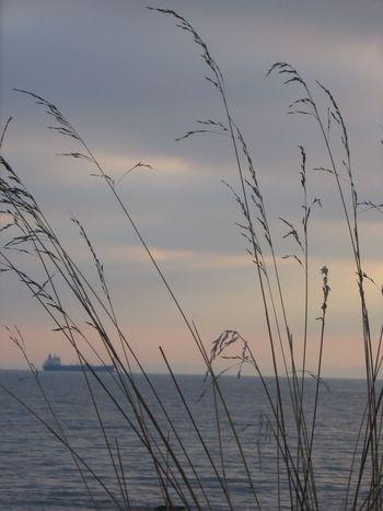 Grass Shiplife Fife Coastal Path Dysart Scotland Fife  FirthOfForth Foreground Focus