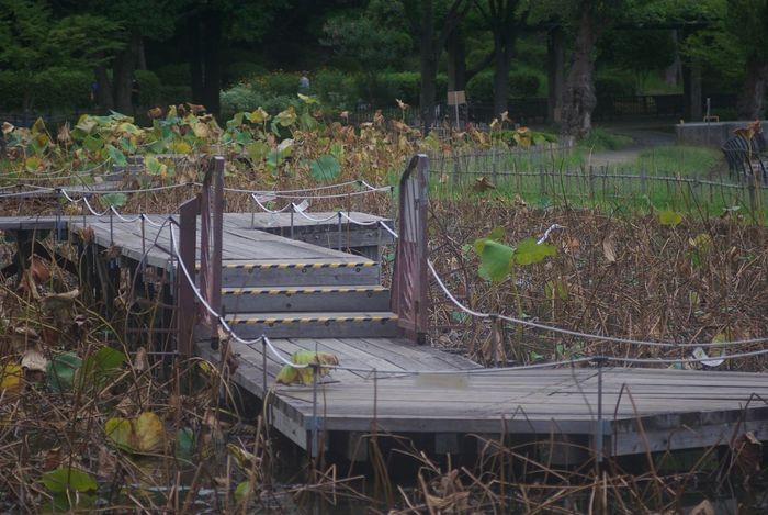 No People Plant Outdoors Tree Growth Grass Nature Day Bridge Wooden Bridge Warking Wark Japan Photography Park Japan Shot Retro